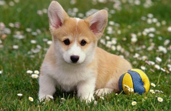 Regolamento Condominiale Animali Domestici Soldioggi